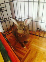 BUNNY RESCUE- Hi my name is Baby Stella and i need a Home