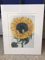 Sunflower in a Glass Frame