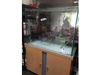 All glass (10mm) tank (102cm x 45cm x 80cm) with stand + FX5 filter
