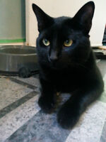 Family and Pet Friendly Cat looking for new home