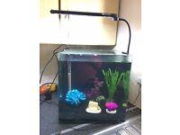 fish tank aquaone cube