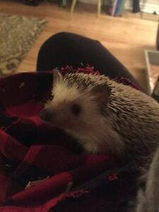 Oscar the Hedgehog!