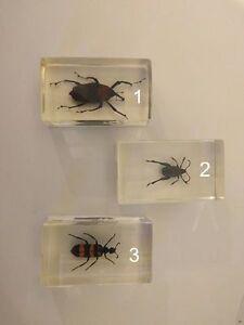 Insectes préservés en lucite scarabées, araignée