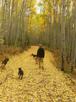 Quality Dog Walking and Animal Care