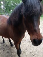 Pony To Give Away To A Good Home