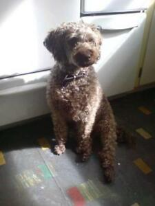 Melbourne Dog Minding in my comfy home $20 per night Nunawading Whitehorse Area Preview