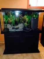Aquariums and accessories for sale