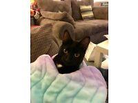 Lost black cat - Luna Glasgow East End glasgow
