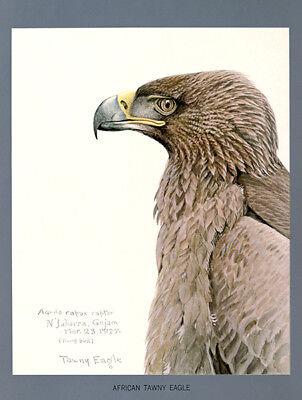 Tawny Eagle - African Tawny Eagle - 1927 - Bird Illustration Poster