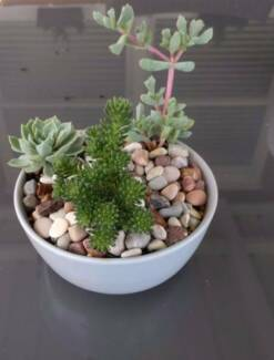Succulent bowl for pick up