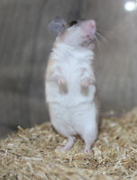 Spiny Mouse - Youth Male