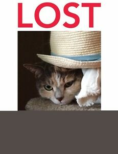 LOST CAT!! London Ontario image 1