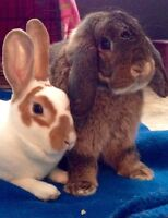 Bunnies looking forever home!
