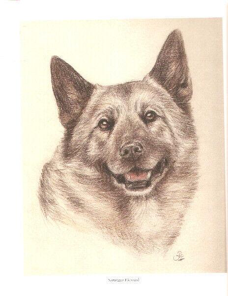 Norwegian Elkhound Head Study Open Edition Art Print by UK Artist Vic Bearcroft