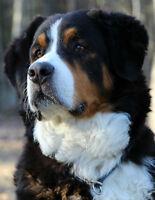 Garderie familiale et pension pour chiens