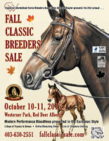 Warmblood Horses wanted for Fall Sale