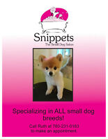 DOG GROOMER :Small dog grooming salon in Millwoods Edmonton