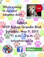 ****ADOPTION EVENT - SAT. May 9 - 11:00am - 3:00pm*****