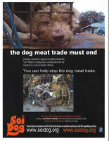 Dog/Cat: Sign all petitions to end the illegal meat trade.