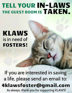 KLAWS: URGENT Need for Fosters for Kitties: Help Save a Life!