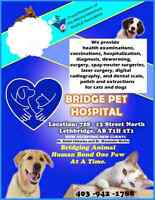 Bridge Pet Hospital