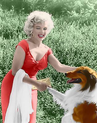 Marilyn Monroe    Marilyn In A Photo With Lassie  1950S