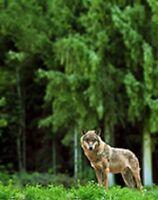 Wilderness & Bear Awareness Online - Terracetraining.com
