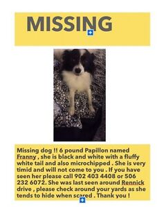 MISSING DOG SMALL AND REALLY SCARED