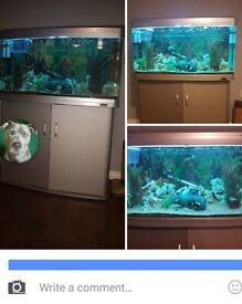 Stunning aqua ar980 fish tank