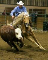 Western Lessons + Training - Rodeo, Cutting, Cowhorse