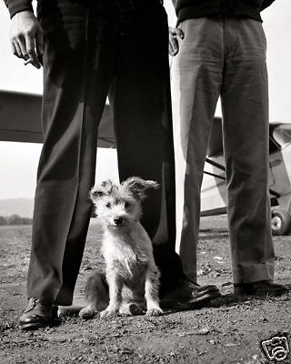 STEVENS AIRPORT MASCOT DOG 8X10 PHOTO DEPRESSION ERA