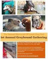 Greyhound Gathering