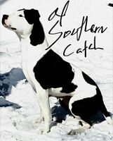 Ol Southern Catch dog ( American Bulldog )