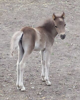 Cutest little filly ever!