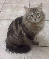 Adorable and super friendly female cats for adoption