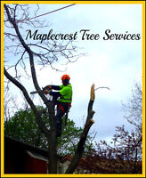 TREE REMOVAL-TREE PRUNING - TREE CUTTING - Best Rates