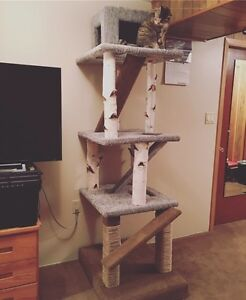 Cat Tree, condo, climber, Cat Perch