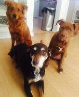 LOOKING FOR PET FRIENDLY HOME FOR AUGUST 1st, 2015