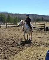 REGISTERED MARE FOR SALE OR TRADE