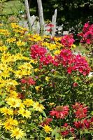 GC Garden Club inviting NEW MEMBERS Oct 25th