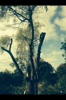 Tree & limb removal, stump grinding, chipping services insured