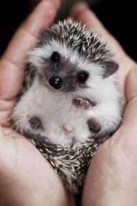 Baby Hedgies ready to go!