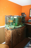 Aquarium Fish tank with all you need