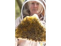 Honey bee swarms collected free of charge within 50 miles - registered & insured