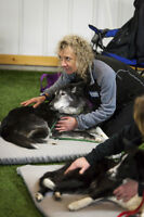 TTouch workshop for dogs in Kamloops
