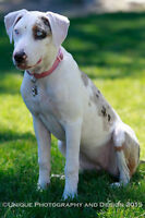 DEAF CATAHOULA NEEDS ACTIVE HOME