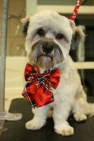 NATURAPETS GROOMING. Christmas Special $10 off 1ST Groom!