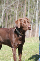 Dog Behaviour Consultations offered by The Dog Classroom