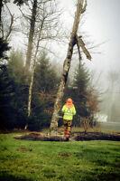 Experienced Arborist