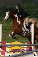 Great horse available for part board.